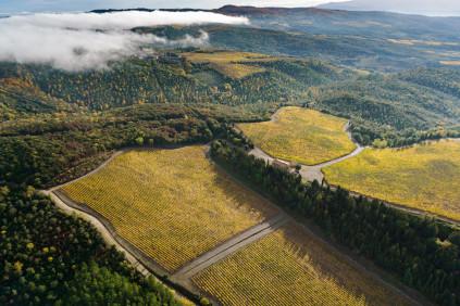 Die Weingärten von Luce della Vite bei Montalcino