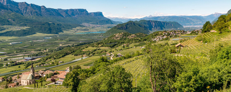 Südtirol Etschtal Weinberge