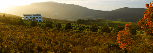Hamilton Russell Vineyards in Walker Bay