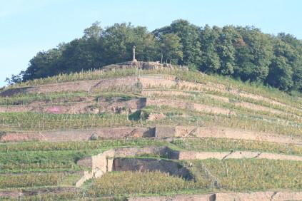 Die markanten Steinterrassen durchziehen den Weinberg von der Domaines Schlumberger