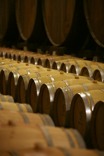 Im Weinkeller von DFJ Vinhos