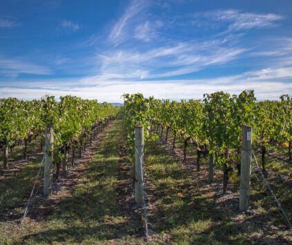 Hawkes Bay Vineyards Wild Rock