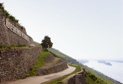 Das Rüdesheimer Roseneck gilt als einer der besten Lagen für kraftvolle Rieslinge
