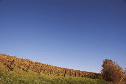 Weinberge in Italien