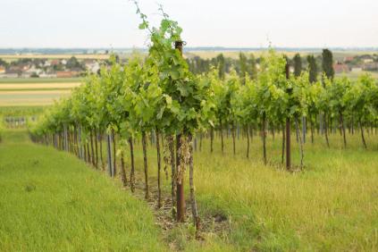 Die Weingärten der Familie Veit