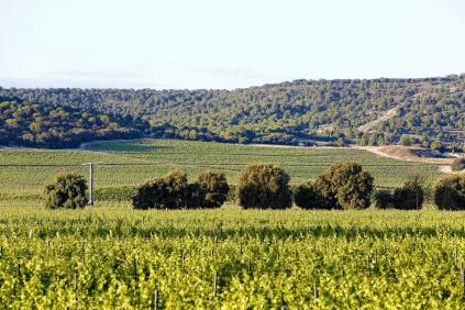 Weingärten von Abadia Retuerta