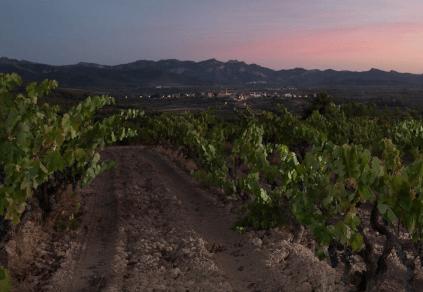 Weingarten von Acustic Celler