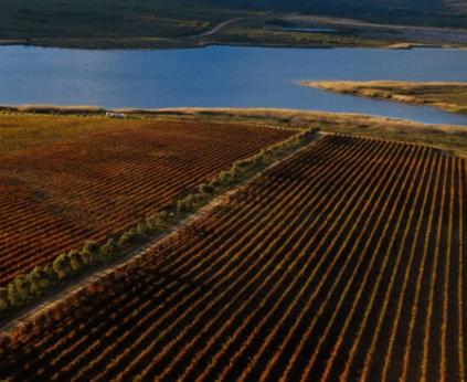 Die Weingärten umweht Meeresluft, auch am Uilenkraal River