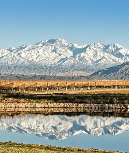 Die Weinberge von Alamos in Mendoza