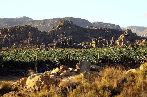 Die zerklüfteten Felsen vom Cederberg