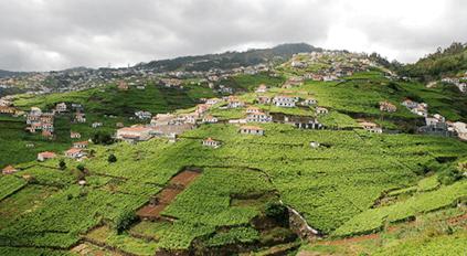 Die für Madeira typischen Poios