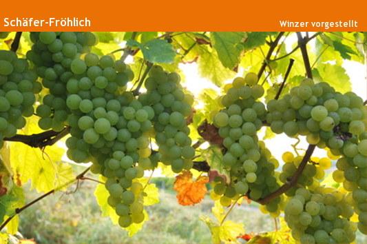 Weingut Schäfer Fröhlich