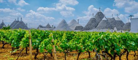 Apulien - Land des Doppio Passo Primitivo