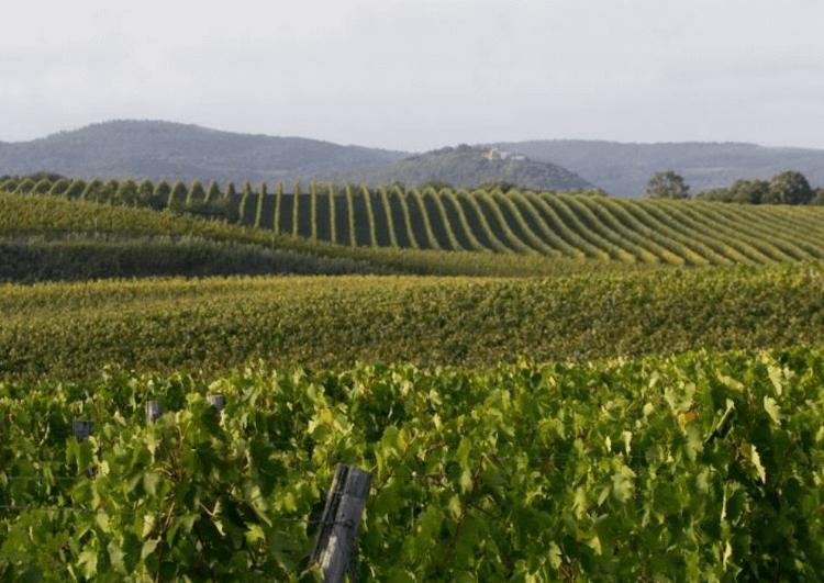 Weitläufige Weingärten von Tenute Nardi