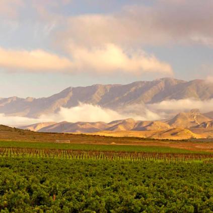 Weingarten von Graham Beck bei Robertson