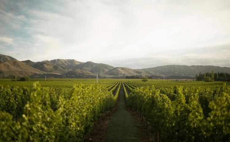 Der Seddon Vineyard in Marlborough