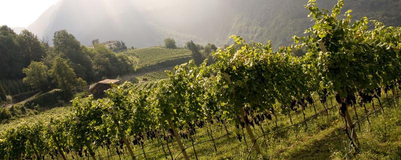 Weingut Castelfeder Südtirol Weinberge